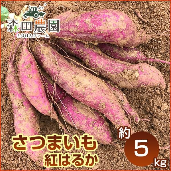 さつま芋「紅はるか」約5kg/S〜Lサイズ/森田農園/高知/日曜市/べにはるか/ベニハルカ/さつまいも/サツマイモ/薩摩