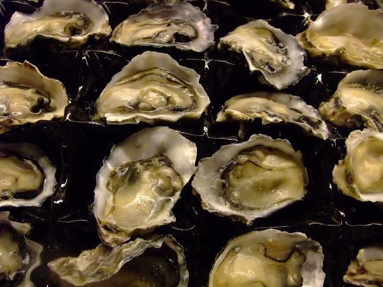 冷凍 ニュージーランド産 生食用牡蠣(カキ) 業務用 24個入り   9-10cm