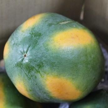 沖縄産 フルーツパパイヤ約6kg 【発送年中・台風などで在庫切れ有ります】 【品種お任せ】