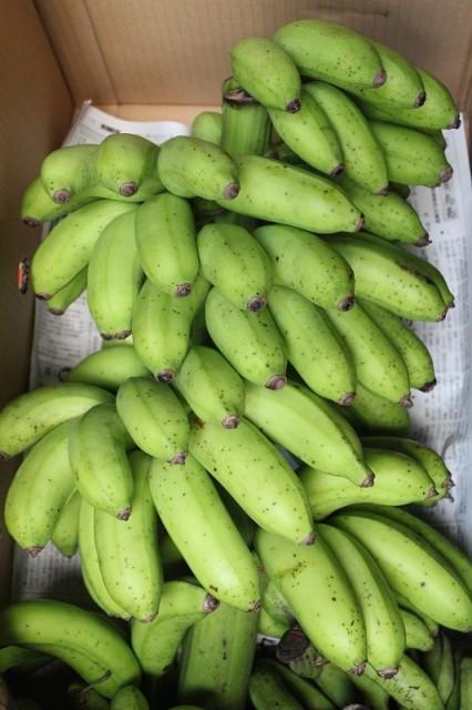沖縄産 島バナナ 約1kg 発送7月〜11月上旬 ※お待たせする場合あり