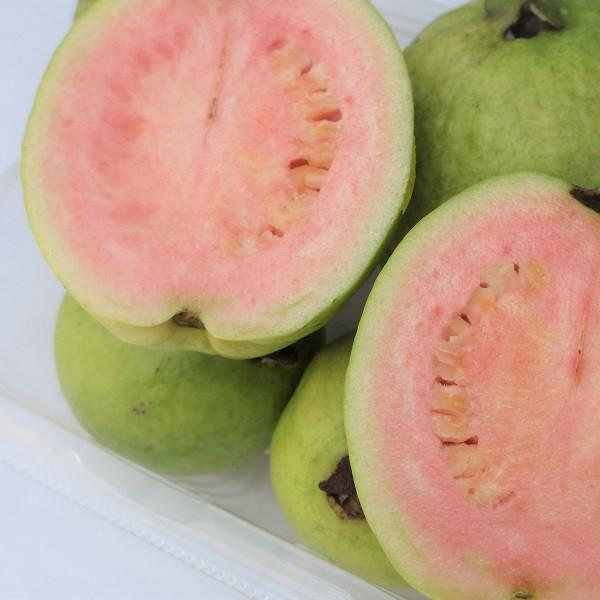 沖縄産 グァバ約8kg 発送7月〜9月 赤・白どちらになるかはお任せになります。