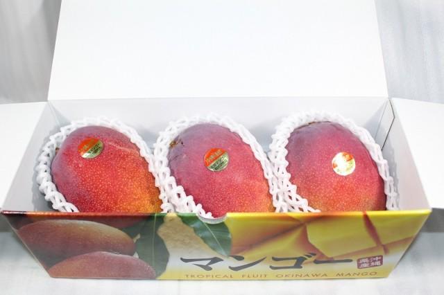 沖縄県産完熟アップルマンゴー 贈答用秀品 1kg(2〜4個) 化粧箱入り【発送7月初〜8月中旬】