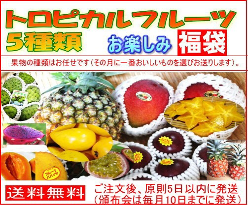 【送料無料】 お任せフルーツ5種類 トロピカルフルーツ お楽しみ福袋【6か月計6回頒布会】