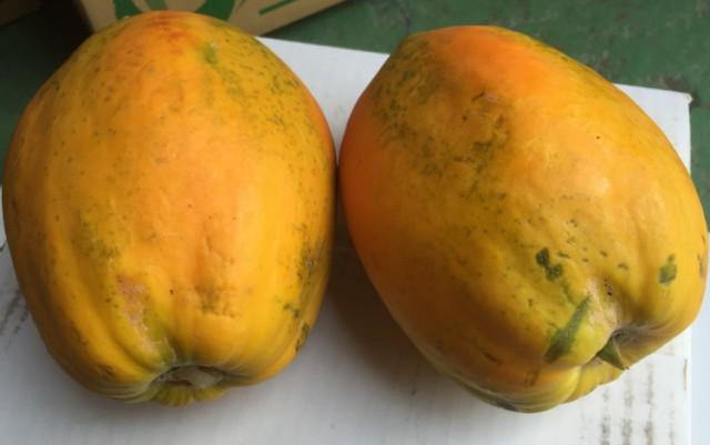 【発送8月〜2月】 沖縄産 フルーツパパイヤ 約4kg(4~8個前後) 【品種石垣サンゴ】 最強のダ