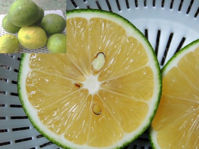 【発送9〜10月】 訳あり沖縄県産グリーン(イエロー)レモン 1kg(4〜12個) 沖縄のレモ