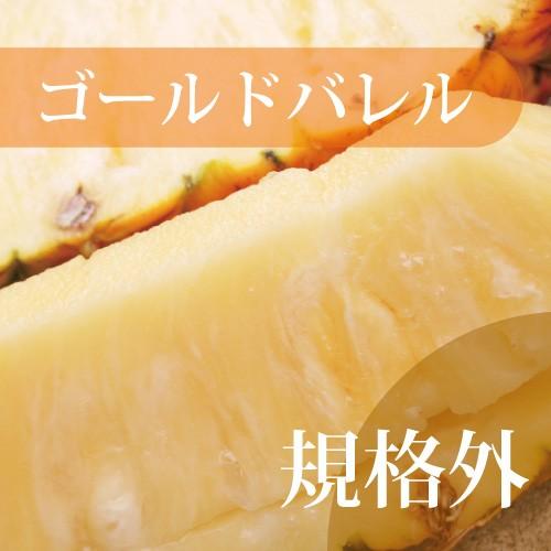 【発送7〜8月】 話題の黄金のパイン・ゴールドバレル  訳あり 1玉(約1kg〜)