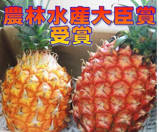 ☆送料無料☆ 農林水産大臣賞受賞 石垣島の當銘さんのパイン2玉