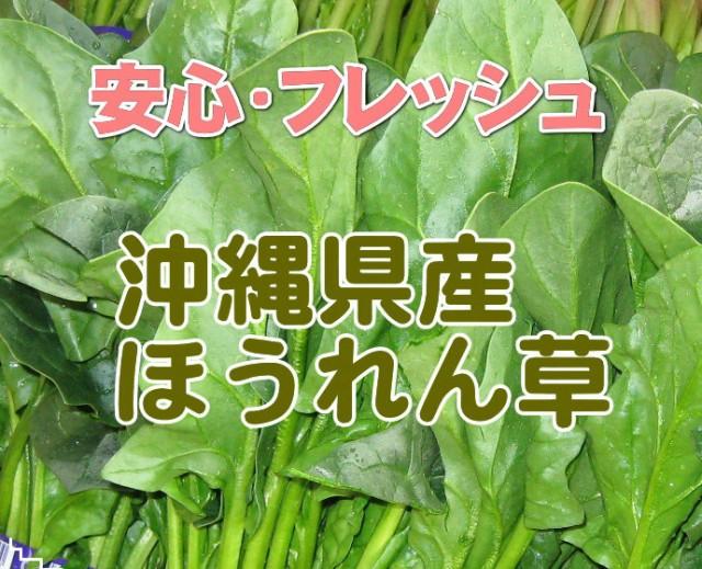 ほうれん草 約500g【発送 11〜6月】