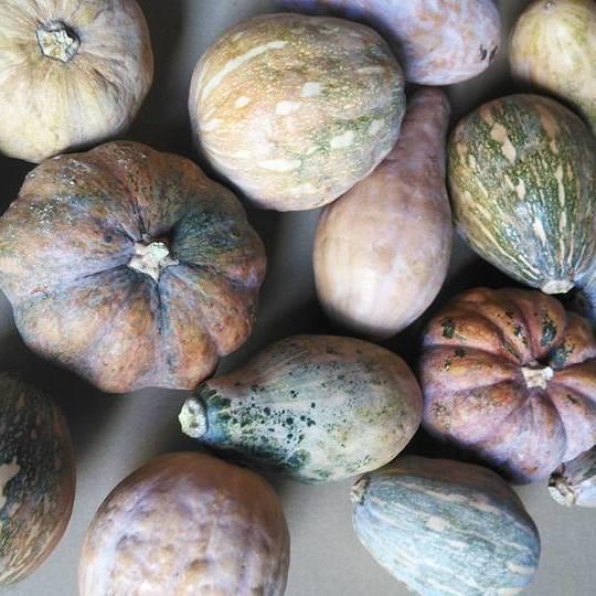 沖縄県産 島かぼちゃ 5kg 【発送10〜2月】 かぼちゃ カボチャ 野菜