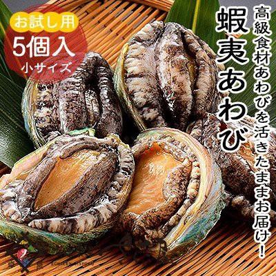 活き蝦夷あわび 小サイズ5個入り(約60g×5個)アワビ 鮑 ※冷蔵品以外と同梱不可(冷蔵便)
