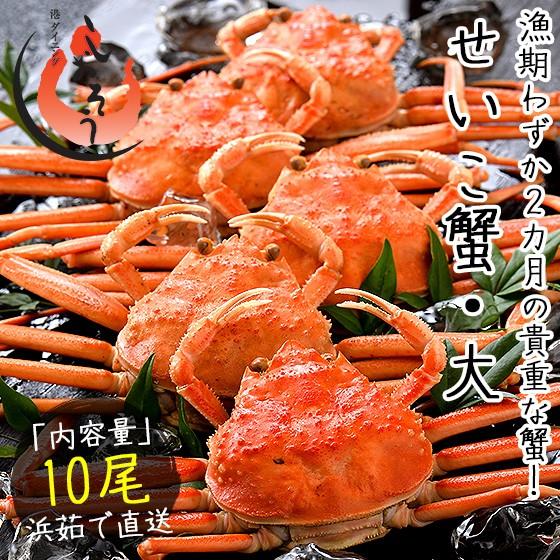 セイコガニ せいこがに せいこ蟹 大サイズ×10尾 福井 越前松葉 (着日指定不可)