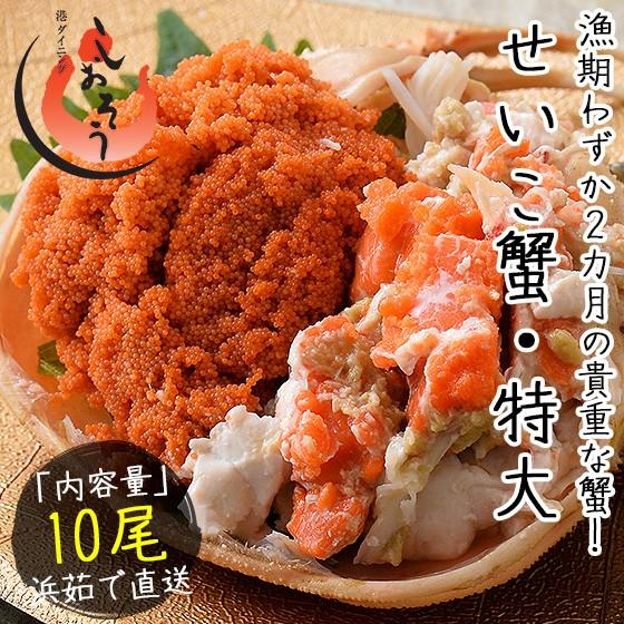 セイコガニ せいこがに せいこ蟹 特大サイズ×10尾 福井 越前松葉 (着日指定不可)