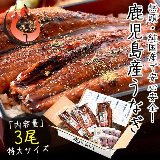 うなぎ 蒲焼き 無頭 鹿児島県産 国産 特大サイズ 約200g×3尾 ウナギ 鰻