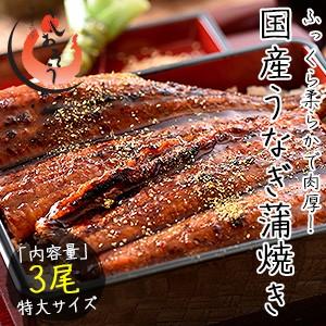 お中元 ギフト うなぎ 蒲焼き 国産 特大サイズ 200g×3尾 ウナギ 鰻