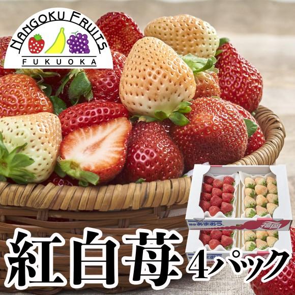 南国フルーツ・福岡産紅白いちご(あまおう&白いちご) 4パック