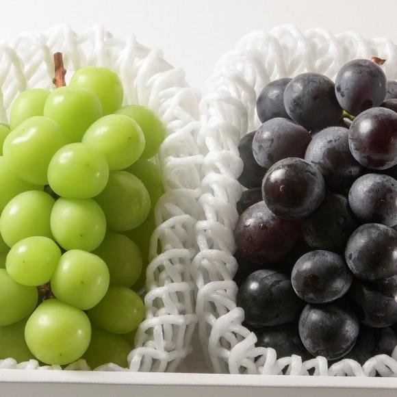 南国フルーツ・岡山産彩り葡萄食べ比べ2房
