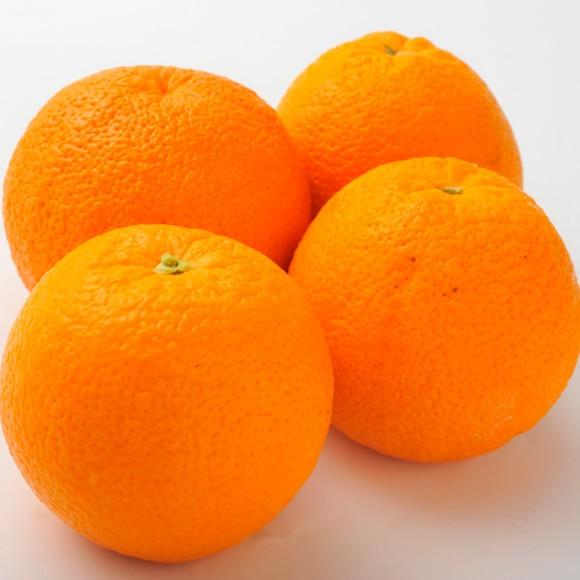 南国フルーツ・オーストラリア産オレンジ特大10玉 送料無料¥3 240
