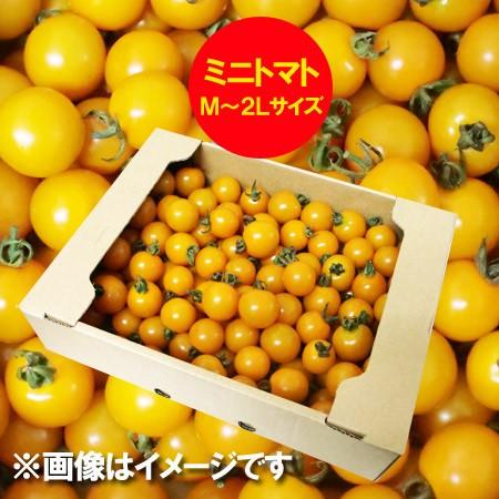 訳あり 送料無料 ミニトマト 北海道 ミニトマト M〜2Lサイズ 2kg(2キロ) 価格 2980円 トマト/とまと 無撰別 品種 オレンジ千果