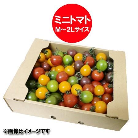 訳あり 送料無料 ミニトマト 北海道 ミニトマト M〜2Lサイズ混合 計 2kg(2キロ) 価格 2980円 トマト/とまと 無撰別 品種 キャロル/オレン