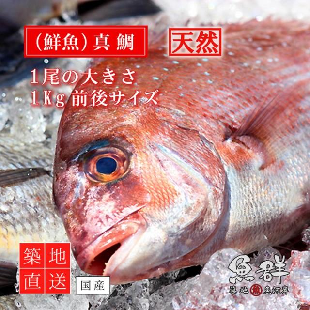 天然 鯛(たい)1尾(1kg前後サイズ)(国産) 冷蔵便 築地直送 [鮮魚]
