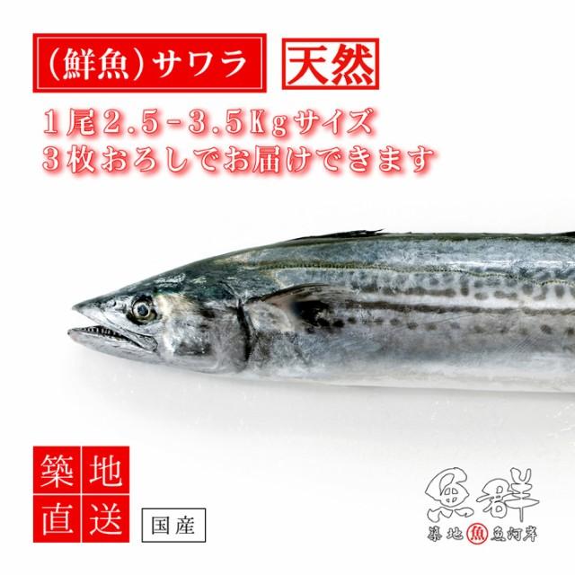 天然 さわら1尾(2-3kg前後サイズ)(国産) 冷蔵便 築地直送 [鮮魚]
