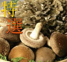 妙義 ナバファーム【特選】 椎茸 (しいたけ)500g【特選】 舞茸 (まいたけ)1株詰め合わせ(合計約1kg)