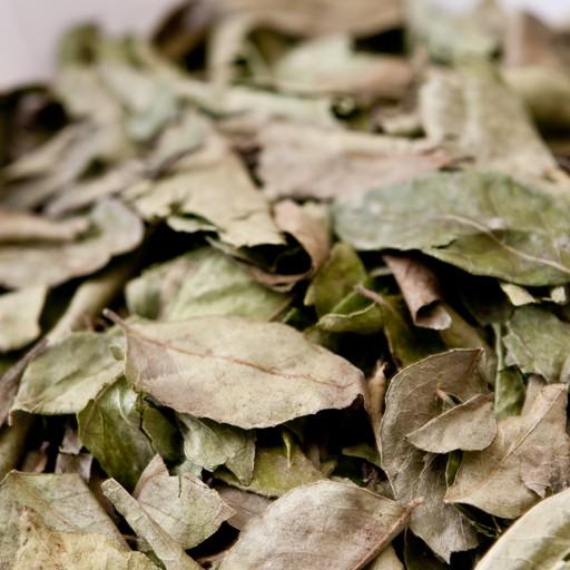 カレーリーフ 10kg 【100g×100袋】葉 Curry Leaf オオバゲッキツ 南洋山椒 大葉月橘 Murraya koenigii Curry Patta【送料無料】