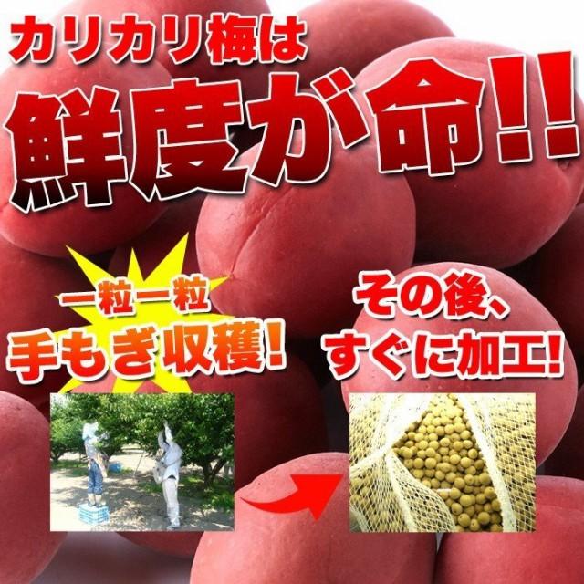 2000円ポッキリ 送料無料 訳あり 食品 人気 の 真っ赤な カリカリ梅 500g 国産梅 お徳用