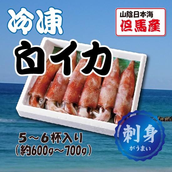 冷凍白イカ 600g(5〜6杯入)海鮮 お刺身に 山陰日本海 但馬産
