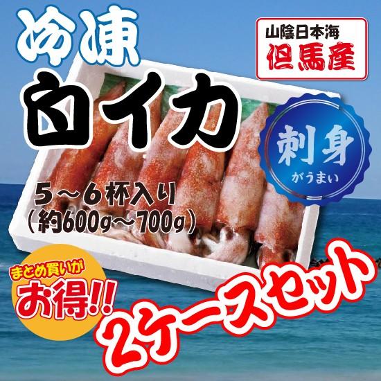【お買い得!2ケースセット】冷凍白イカ(5〜6杯入り 約600g〜700g)海鮮 刺身定番 山陰日本海 但馬産 白いか ケンサキイカ
