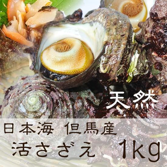 活さざえ 1kg 8〜12個 山陰日本海の荒波で育った 天然 活きたまま発送 【冷蔵便】