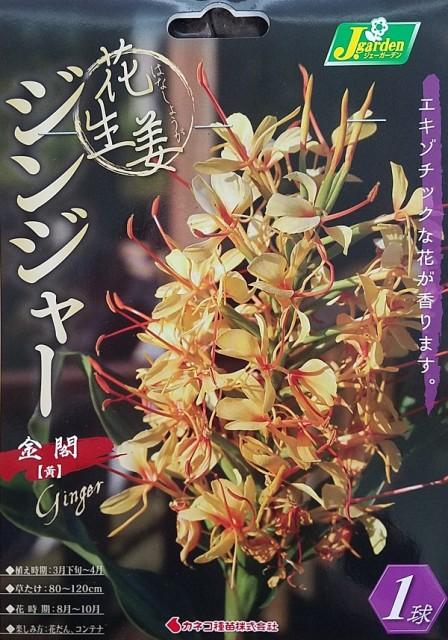 【花球根】花生姜 ジンジャー 金閣(黄)1球入 カネコ種苗の球根