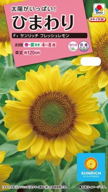 【種子】花粉の出ない緑芯ひまわりF1 サンリッチ フレッシュレモン タキイ種苗のタネ