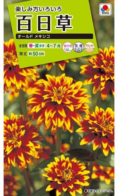 【種子】百日草(ジニア)オールド メキシコ タキイ種苗のタネ