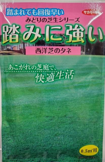 【種子】西洋芝 踏みに強い西洋芝(芝草) サカタのタネ