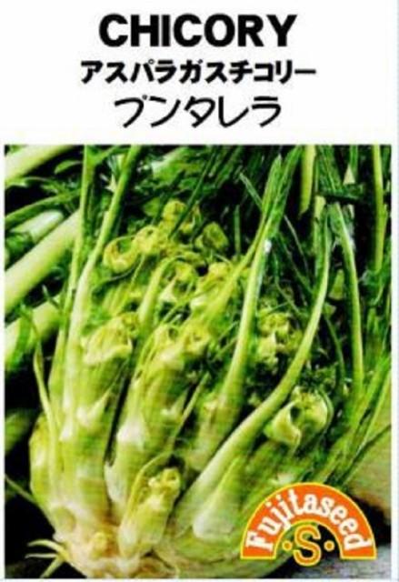 【種子】CHICORY アスパラガスチコリー プンタレラ 藤田種子のタネ
