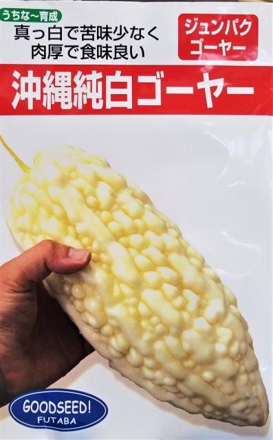 【種子】沖縄純白ゴーヤー フタバ種苗のタネ