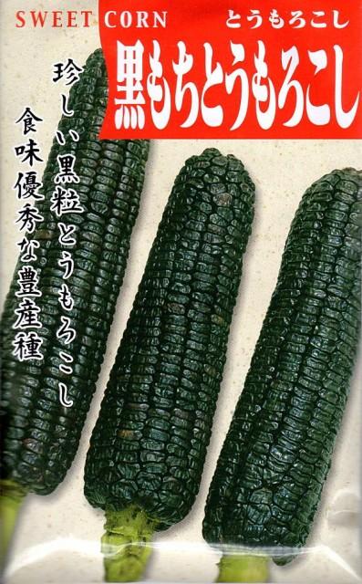 【種子】とうもろこし 黒もちとうもろこし 日本タネセンターのタネ