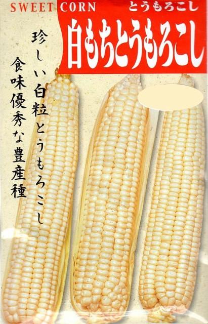 【種子】とうもろこし 白もちとうもろこし 日本タネセンターのタネ