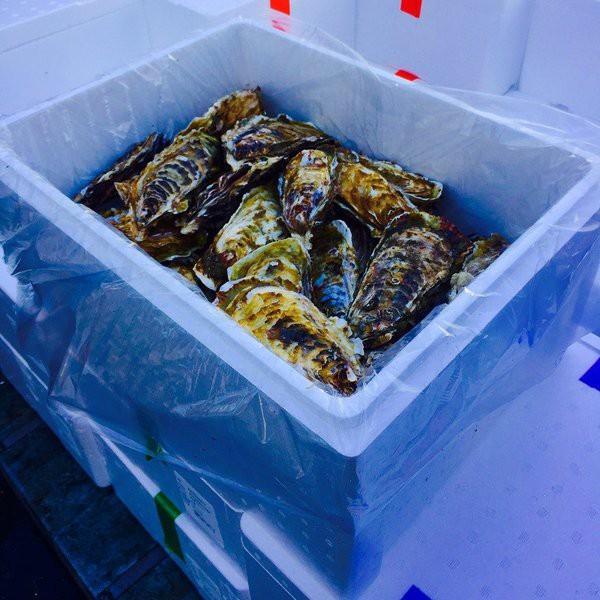 殻付きカキ 殻付牡蠣 カキ 生鮮 加熱用 宮城県産 三陸産 2K入り