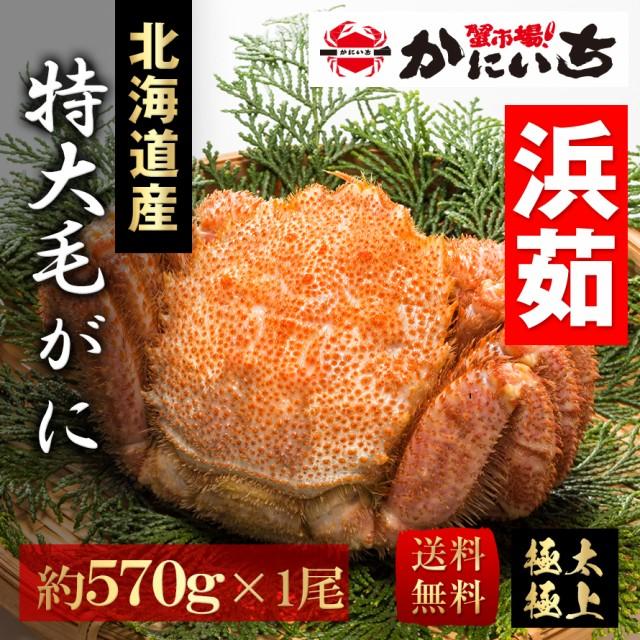 特大毛蟹 北海道産 一尾(約570g) 浜茹で 送料無料 けがに 毛ガニ