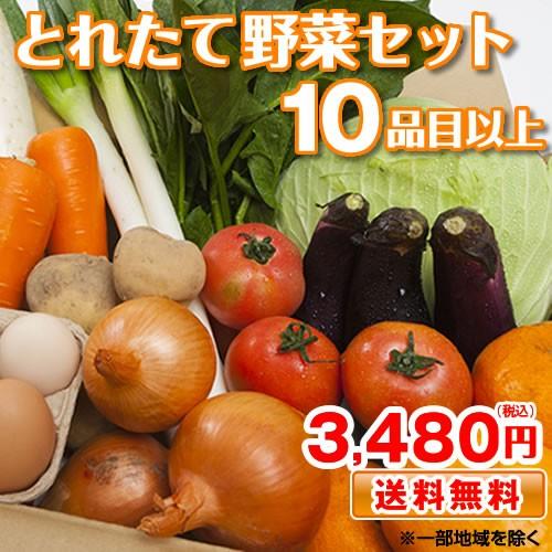 野菜セット 九州産 熊本産 送料無料 10品目以上