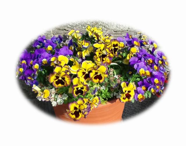 花 ギフト 花 アレンジメント 花 鉢植え 花 プレゼント 花 アレンジメント お祝い 花 インテリア 花 フラワー