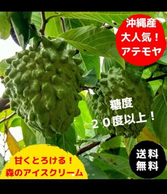 ご贈答に!森のアイスクリーム!甘くとろける!沖縄産 人気のアテモヤ 1.5kg
