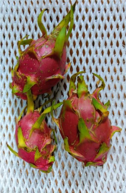 絶品!食べ比べ是非!ドラゴンフルーツ赤果実 1.5?