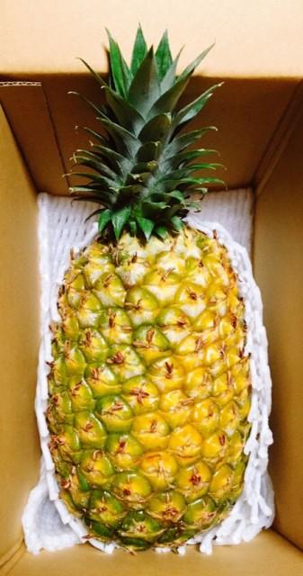 収穫に3年!パインの最高峰!別格の美味しさ 沖縄本島北部産パイナップル 完熟ゴールドバレル(金の樽)1玉 ギフトにもおススメ!!