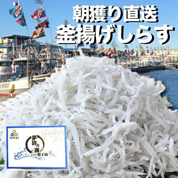 \朝獲れ!漁港より直送/釜揚げしらす 500g 岸和田漁港水揚げ 大容量 メガ盛り 超お買い得 冷蔵便
