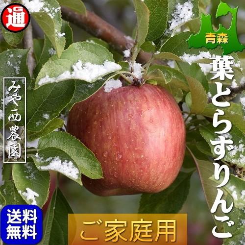 葉とらずりんご 青森 家庭用 10kg 青森りんご サンふじ 送料無料 訳あり 青森 りんご 青森県産リンゴ