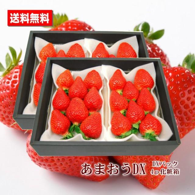 いちご 送料無料 あまおう 福岡県産 DX 4パック 化粧箱 贈答用 家庭用 おためし