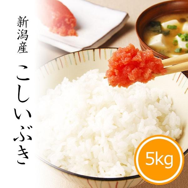 米 5kg こしいぶき 令和2年産 お米 精米 白米 新潟県産